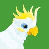 鹦鹉-顶头白色鹦鹉美冠鹦鹉 免版税库存照片