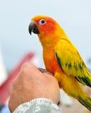 鹦鹉 免版税库存照片