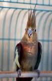 鹦鹉2 免版税图库摄影