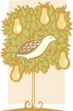 鹧和洋梨树 免版税库存照片