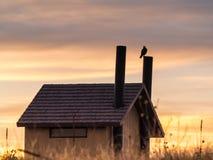 鹰剪影在日落的 库存图片