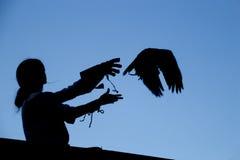 鹰剪影 库存图片