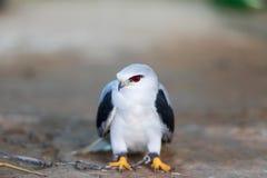 鹰在寻找的鸟培训学校和保护工厂和房子免受屎是医疗保健 免版税库存图片