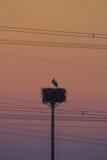鹳、日落和输电线 免版税库存照片