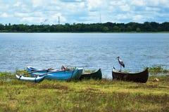 鹳坐小船 在净水的看法 免版税库存照片