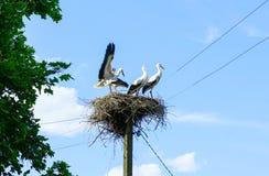鹳家庭在巢的在杆 夏天横向 免版税库存图片