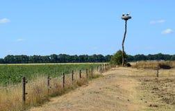 鹳巢在领域的 库存图片