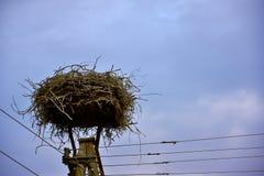 鹳巢  免版税库存图片