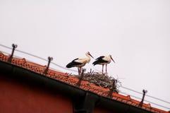 鹳鸟夫妇在屋顶和巢的 库存图片