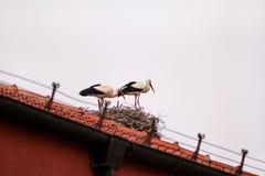 鹳鸟夫妇在屋顶和巢的 免版税库存照片