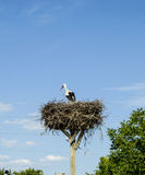 鹳` s巢、自然鹳` s巢、小狗和鹳` s筑巢,在屋顶的鹳图片, 图库摄影