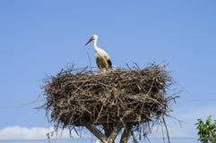 鹳` s巢、自然鹳` s巢、小狗和鹳` s筑巢,在屋顶的鹳图片, 库存图片