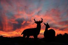 鹿享用夜空白尾鹿 库存照片