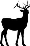 鹿剪影 免版税库存照片