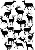 鹿十八个剪影 免版税图库摄影