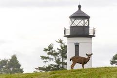 鹿和灯塔 免版税库存照片