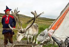 鹿和驯鹿交配动物者 免版税图库摄影