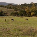 鹿在公园 库存照片