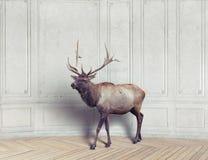 鹿在屋子里 免版税库存图片