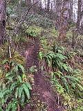 鹿在山的麋足迹通过蕨 免版税库存照片