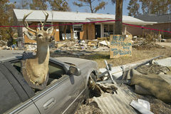 鹿在房子前面的车窗和残骸里 免版税图库摄影