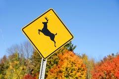 鹿在秋天森林前面的横穿标志 免版税库存照片