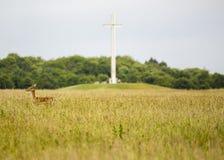 鹿在菲尼斯公园,都伯林 库存照片