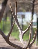 鹿垫铁在自然的一个公园 免版税图库摄影