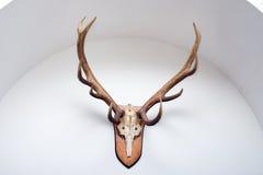 鹿垫铁墙壁 图库摄影