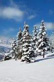 鹿大量杉木雪结构树犹他谷 库存照片