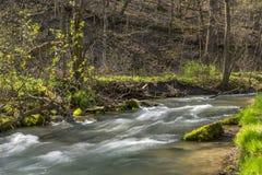 鹿小河在春天 库存照片