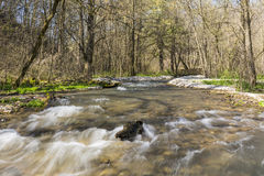 鹿小河在春天 库存图片