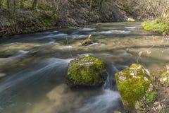 鹿小河在春天 免版税库存照片