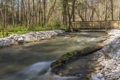 鹿小河在春天 免版税库存图片