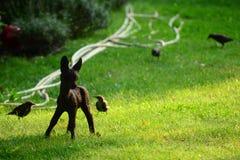 鹿小雕象 库存照片