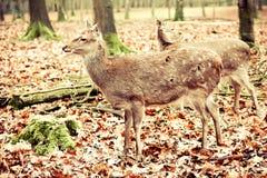 鹿年轻人 库存照片