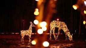 鹿明亮的圣诞节照明家庭  库存照片