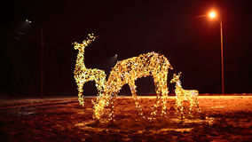 鹿明亮的圣诞节照明家庭  库存图片