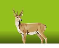 鹿有绿色背景 库存照片