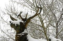 鹿木头在雪下的 库存图片