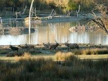 鹿母鹿小鹿和牡鹿在Sainte克鲁瓦野生动物园在摩泽尔 图库摄影