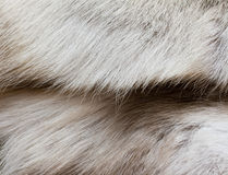 鹿毛皮s纹理 库存图片