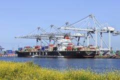 鹿特丹被停泊的集装箱船港  库存图片
