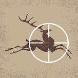 鹿狩猎 库存照片