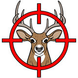 鹿狩猎 免版税库存图片