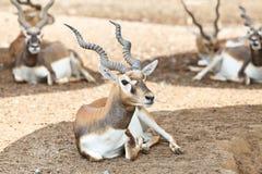 鹿男性年轻人 免版税库存照片