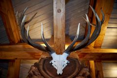 鹿的垫铁和头骨 库存图片