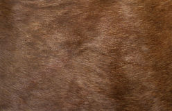 鹿的皮肤 库存图片