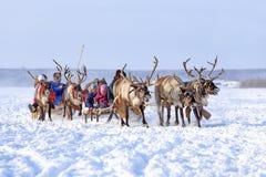 鹿的队 图库摄影