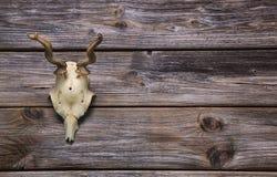 鹿角或垫铁在木背景 狩猎战利品 图库摄影